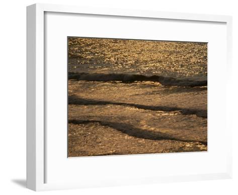 The Golden Surf Crashes on the Olympic Peninsula at Sunset-Sam Abell-Framed Art Print