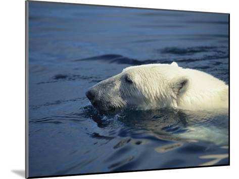 Polar Bear, Wager Bay, Northwest Territories, Canada-Joe Stancampiano-Mounted Photographic Print