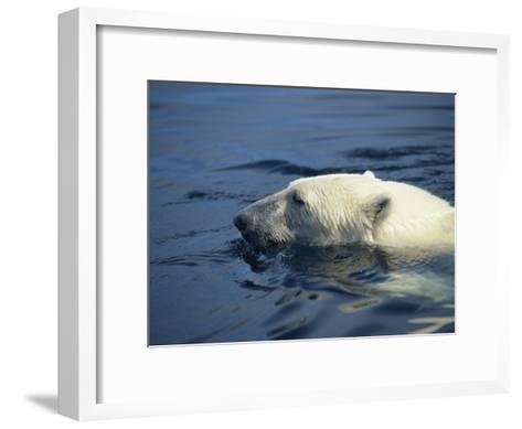 Polar Bear, Wager Bay, Northwest Territories, Canada-Joe Stancampiano-Framed Art Print