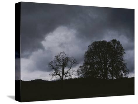 Trees Stand in Silhouette on a Dark Cloudy Day-Bates Littlehales-Stretched Canvas Print