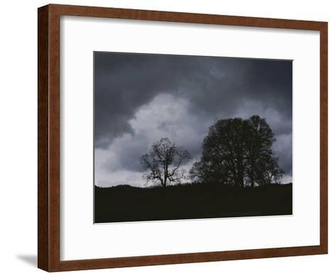 Trees Stand in Silhouette on a Dark Cloudy Day-Bates Littlehales-Framed Art Print