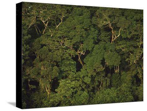 An Aerial View of the Rain Forest in Nouabale-Ndoki National Park-Michael Nichols-Stretched Canvas Print
