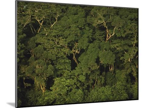 An Aerial View of the Rain Forest in Nouabale-Ndoki National Park-Michael Nichols-Mounted Photographic Print
