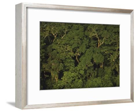 An Aerial View of the Rain Forest in Nouabale-Ndoki National Park-Michael Nichols-Framed Art Print
