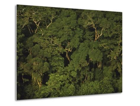 An Aerial View of the Rain Forest in Nouabale-Ndoki National Park-Michael Nichols-Metal Print