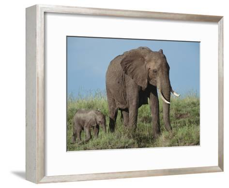 An African Elephant with Her Calf-Norbert Rosing-Framed Art Print