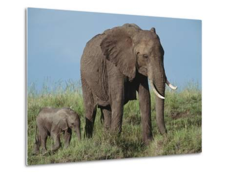 An African Elephant with Her Calf-Norbert Rosing-Metal Print