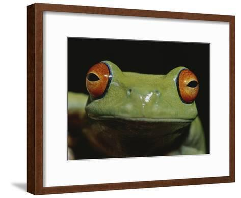 Colorful Close View of Red-Eyed Tree Frog-Jason Edwards-Framed Art Print