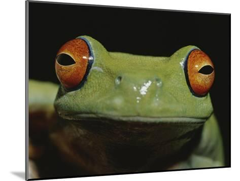 Colorful Close View of Red-Eyed Tree Frog-Jason Edwards-Mounted Photographic Print