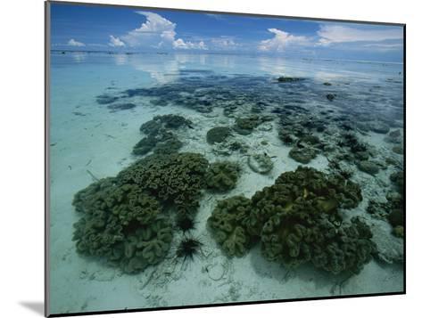 Coral Reef at Low Tide off of Kapalai Island-Tim Laman-Mounted Photographic Print
