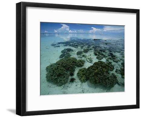 Coral Reef at Low Tide off of Kapalai Island-Tim Laman-Framed Art Print