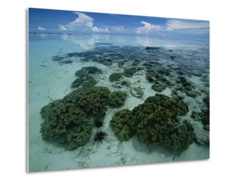 Coral Reef at Low Tide off of Kapalai Island-Tim Laman-Metal Print