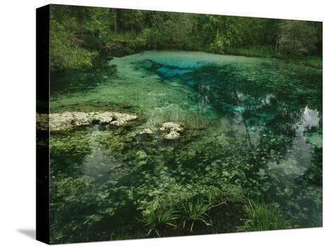 Algae Bloom in a Woodland Pond or Marsh-Raymond Gehman-Stretched Canvas Print