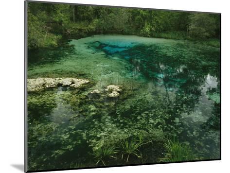 Algae Bloom in a Woodland Pond or Marsh-Raymond Gehman-Mounted Photographic Print