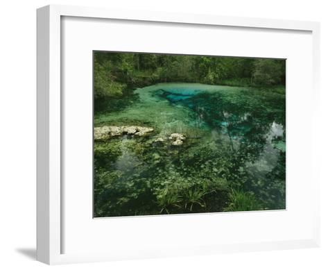 Algae Bloom in a Woodland Pond or Marsh-Raymond Gehman-Framed Art Print