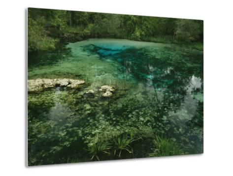 Algae Bloom in a Woodland Pond or Marsh-Raymond Gehman-Metal Print