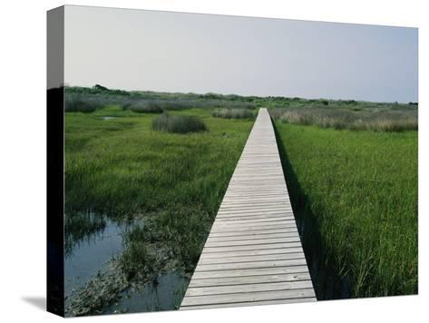 Walkway Above Wetlands-Stephen Alvarez-Stretched Canvas Print