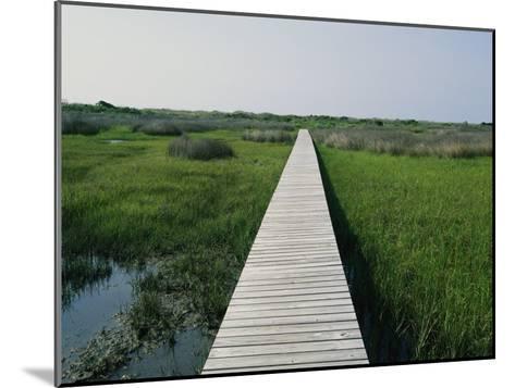 Walkway Above Wetlands-Stephen Alvarez-Mounted Photographic Print