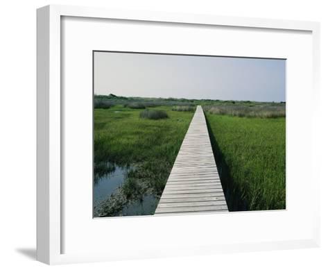 Walkway Above Wetlands-Stephen Alvarez-Framed Art Print