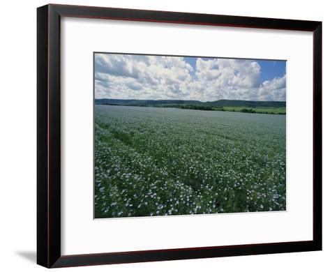 Flax Field, Saskatchewan, Canada-Michael S^ Lewis-Framed Art Print