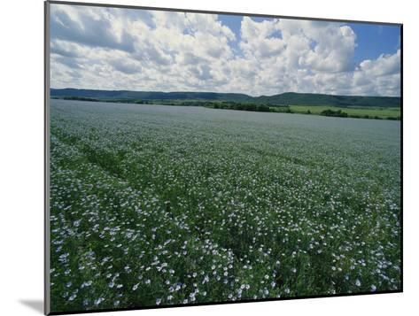 Flax Field, Saskatchewan, Canada-Michael S^ Lewis-Mounted Photographic Print