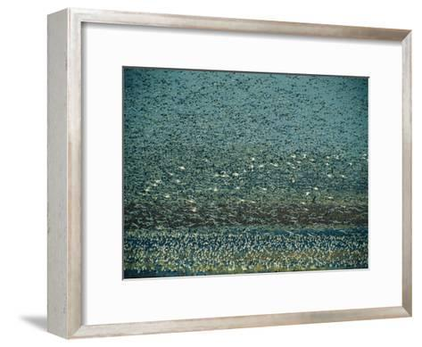 Thousands of Geese Fill the Sky-Joel Sartore-Framed Art Print