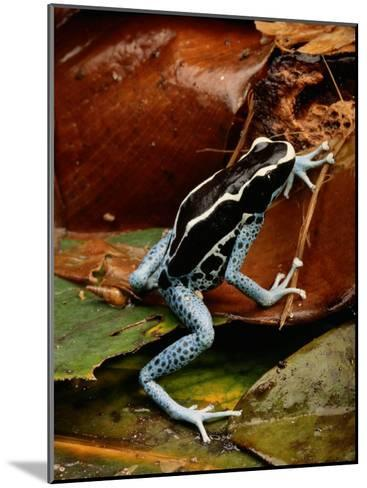 Poison-Dart Frog-George Grall-Mounted Photographic Print