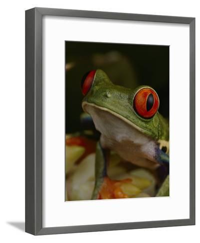 Red-Eyed Tree Frog-Michael Nichols-Framed Art Print
