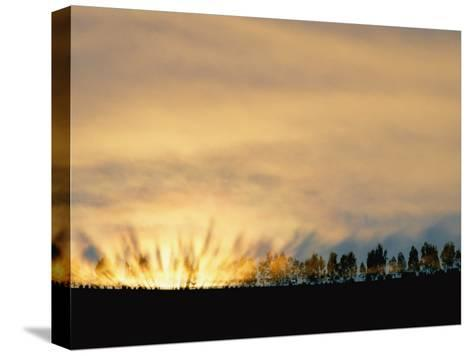 Sun Rising from Behind the Trees on a Foggy Morning-Annie Griffiths Belt-Stretched Canvas Print