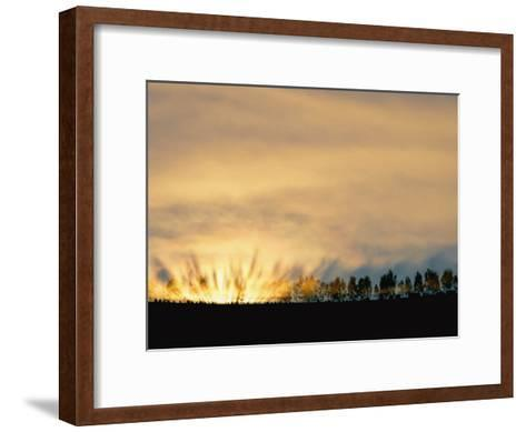 Sun Rising from Behind the Trees on a Foggy Morning-Annie Griffiths Belt-Framed Art Print
