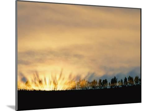Sun Rising from Behind the Trees on a Foggy Morning-Annie Griffiths Belt-Mounted Photographic Print