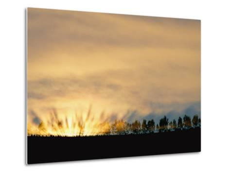 Sun Rising from Behind the Trees on a Foggy Morning-Annie Griffiths Belt-Metal Print