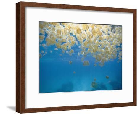Sea Thimble Jellyfish-Bill Curtsinger-Framed Art Print