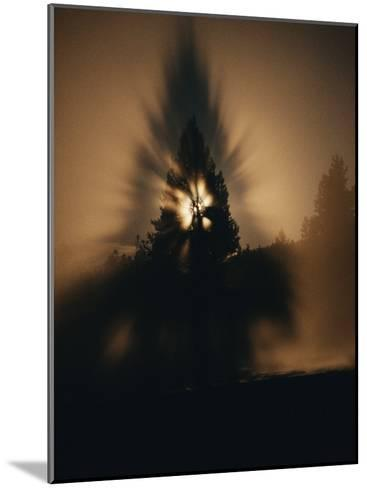 The Moon and a Tree Reflected in Water-Sam Abell-Mounted Photographic Print
