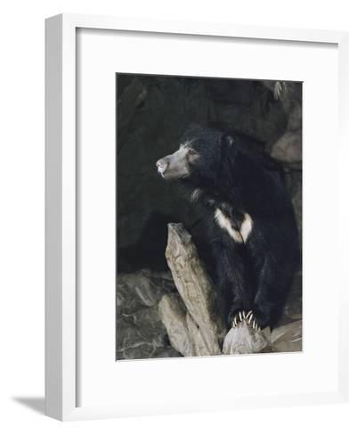 A Sleepy Sloth Bear Takes a Breather Outside its Cave-Joseph H^ Bailey-Framed Art Print