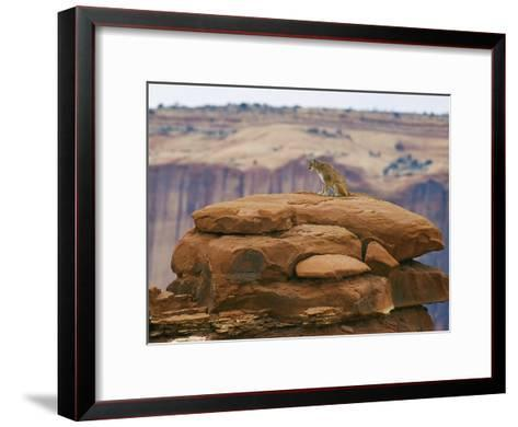A Mountain Lion Pauses Atop a Cliff Ledge-Norbert Rosing-Framed Art Print