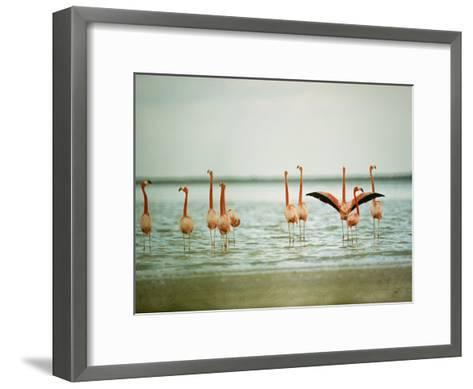 Flamingoes in the Water-James L^ Stanfield-Framed Art Print