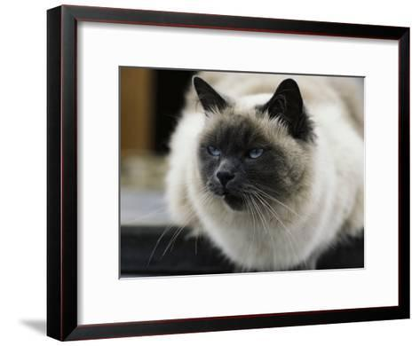 A Pet Cat Onboard a Trawler-James L^ Stanfield-Framed Art Print