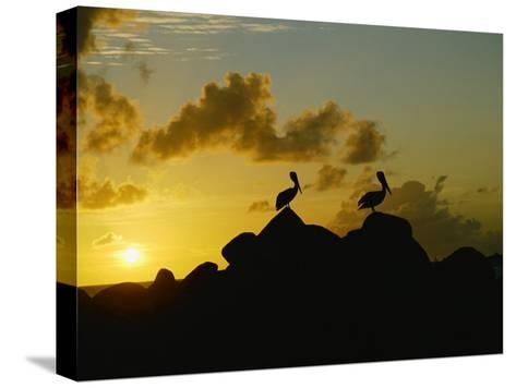 Two Pelicans Perched on Rocks are Silhouetted against a Sunset Sky-Todd Gipstein-Stretched Canvas Print