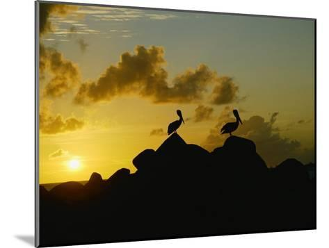 Two Pelicans Perched on Rocks are Silhouetted against a Sunset Sky-Todd Gipstein-Mounted Photographic Print