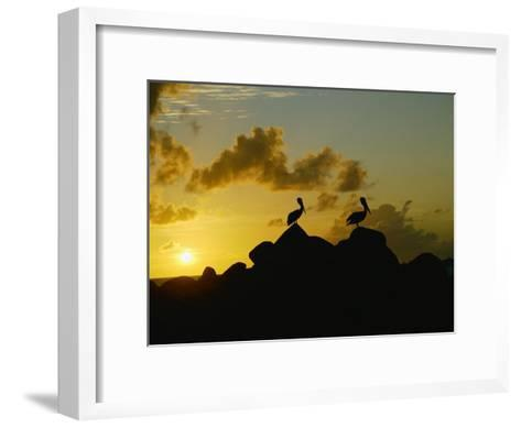 Two Pelicans Perched on Rocks are Silhouetted against a Sunset Sky-Todd Gipstein-Framed Art Print