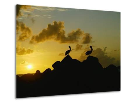 Two Pelicans Perched on Rocks are Silhouetted against a Sunset Sky-Todd Gipstein-Metal Print