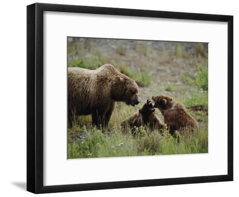 A Mother Grizzly Bear Watches as Her Two Cubs Play-Joel Sartore-Framed Art Print