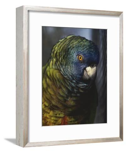 Saint Lucia Parrot-Bates Littlehales-Framed Art Print
