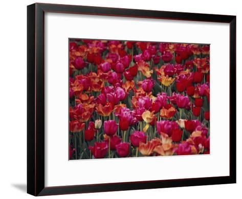 Tulips Bloom in the Hotel Gardens-Stephen St^ John-Framed Art Print