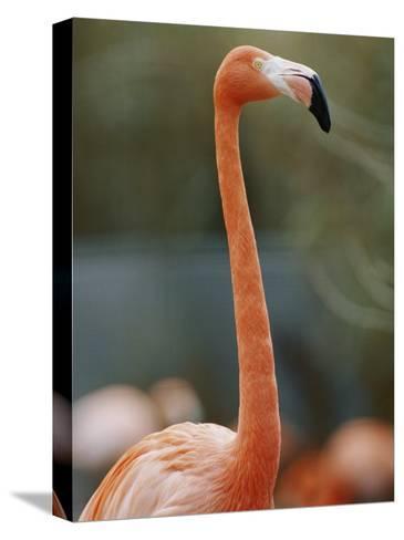 Flamingo-Vlad Kharitonov-Stretched Canvas Print