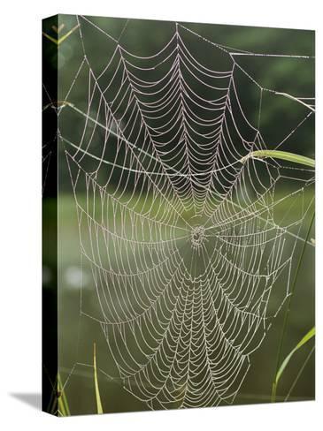 A Spiderweb Covered in Dew-Darlyne A^ Murawski-Stretched Canvas Print