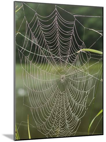 A Spiderweb Covered in Dew-Darlyne A^ Murawski-Mounted Photographic Print