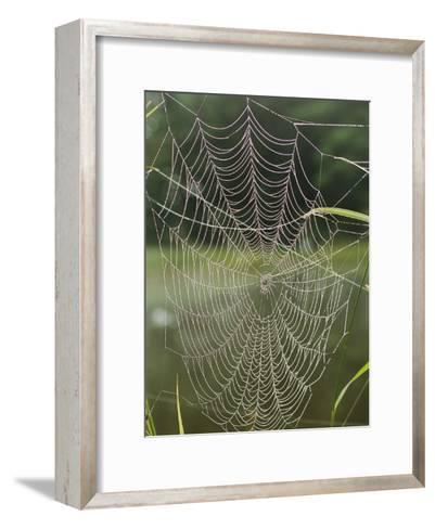 A Spiderweb Covered in Dew-Darlyne A^ Murawski-Framed Art Print