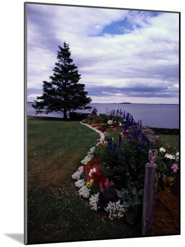 Flower Bed and Tree Overlooking the Water-Sam Abell-Mounted Photographic Print